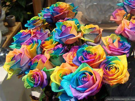 budak bahagia  colors  rainbow