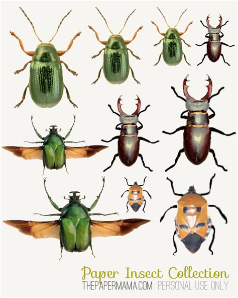 paper insect collection tutorial with free printables