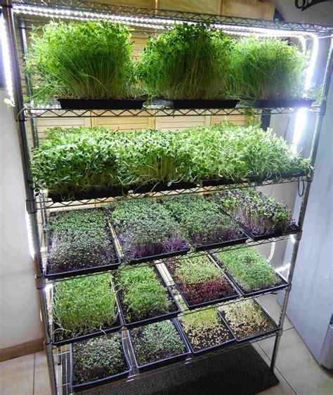microgreen growing system mg indoor vegetable