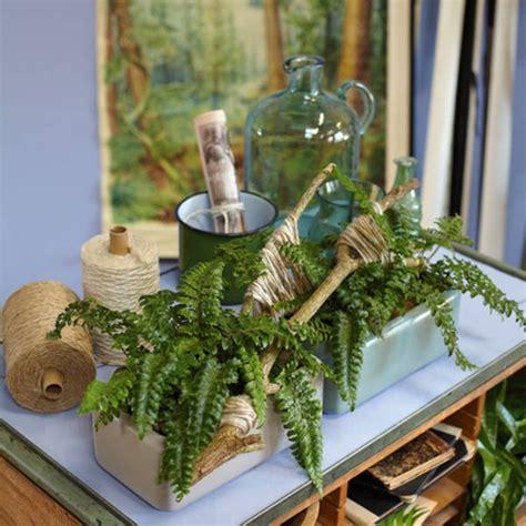 Zimmerpflanzen Deko Ideen by Zimmerpflanzen Deko Ideen