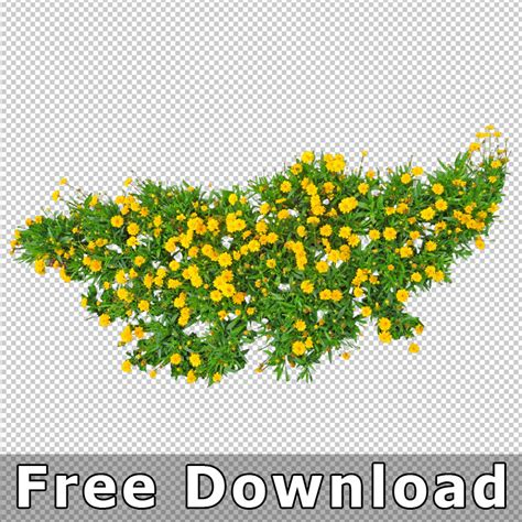top view flowers cutout plan view images png for