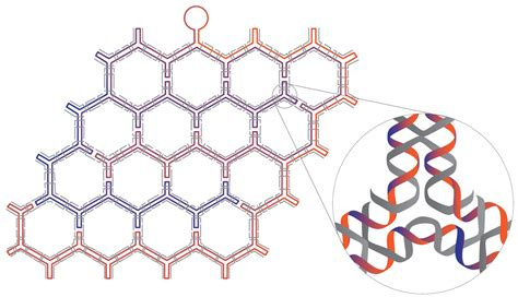 Dna Origami Nature - dna derived molecular machinery that looks like origami