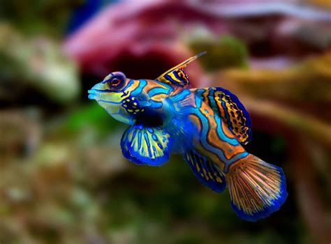 bright colored fish top 10 most beautiful animals in the world