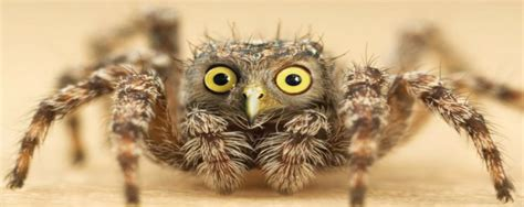 illuminati owls illuminati the owls and the spiders max resistance