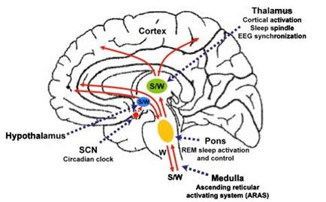 ode to the brain positiveneuro neurobiology of sleep sleep ebook