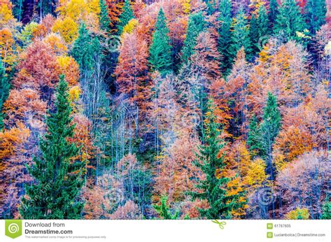 autumn in the forest stock photo image 61767605