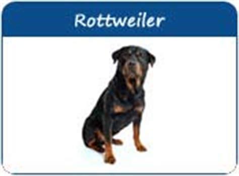strong names rottweiler rottweiler names rotti names rottweiler names rottweiler puppy names page 1