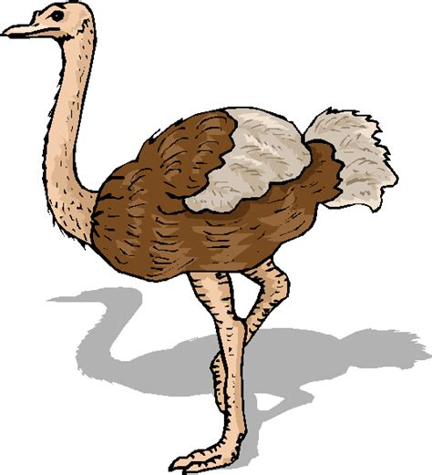 ostrich clipart ostrich clipart the cliparts
