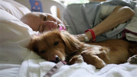for dogs to be a therapy quot pawsitive pals quot san diego hospice pet therapy program
