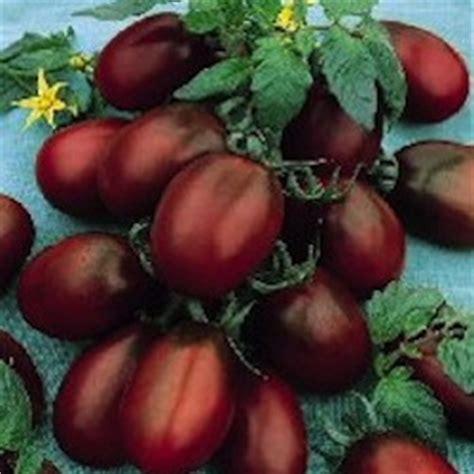 Tomot Black Plum rei do tomate sementes de tomate plantio ab 243 boras