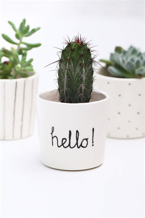 cute succulents 25 best ideas about cacti and succulents on pinterest
