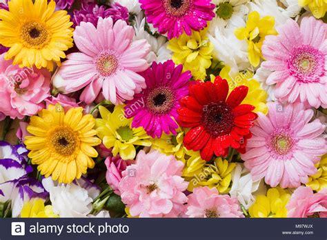 fiori di appartamento gerbera e altri fiori colorati disposti come una naturale
