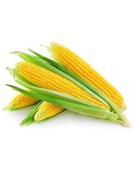 m fruit srl corn on the cob kardel frozen fruits and vegetables in