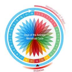 Menstrual Cycle And Ovulation Calendar Ovulation Understanding Ovulation Cycles