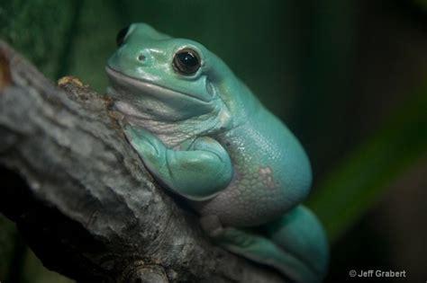 Bjeff Frog Handmade 140 best pet frogs images on hibians pet