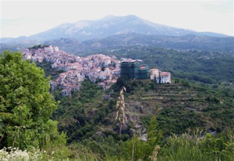 libreria ermes potenza piante spontanee mediterranee dalla macchia mediterranea