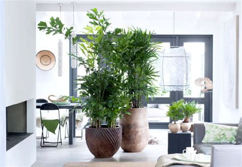 Planten In Huis Trends by Trendy Planten Interieur Droomhome Interieur Woonsite