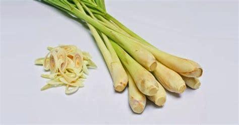 Obat Asam Lambung Dari Tumbuhan obat asam lambung manfaat daun serai