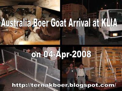 Skim Milk Australia Untuk Ternak ternak kambing boer kemasukan kambing boer dari australia