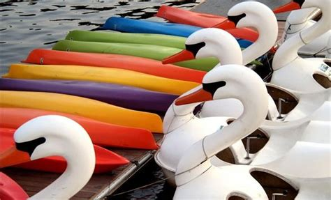 swan boats penn s landing 41 best images about francesca s philadelphia quot jumping the