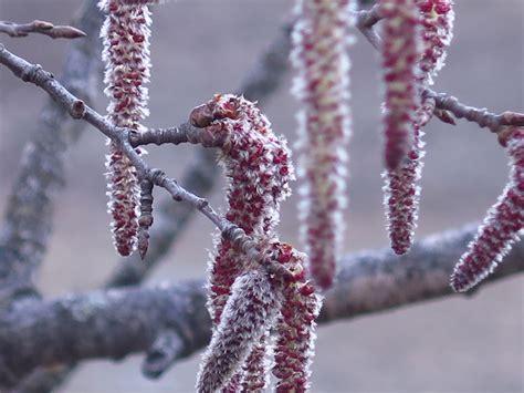 fiori di bach aspen aspen il fiore di bach contro il panico benessere
