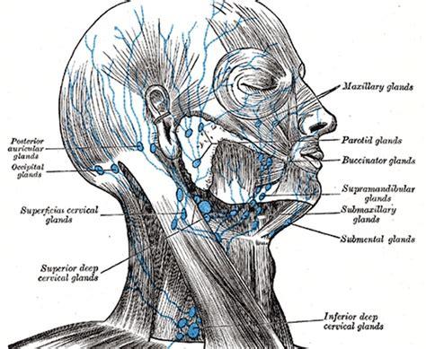 linfonodo testa scrive linfonodo di tipo