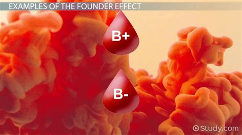 founder effect exle definition video lesson
