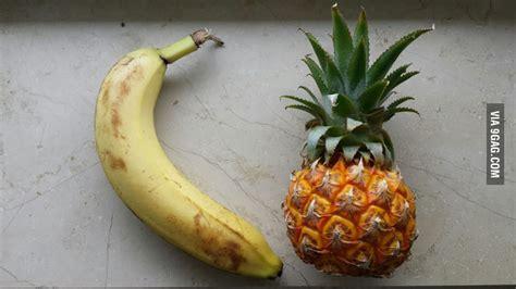 these tiny bananas banana for scale album on imgur tiny pineapple banana for scale 9gag
