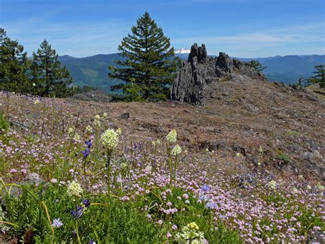 mountain plants of the western cascades bearbones mountain