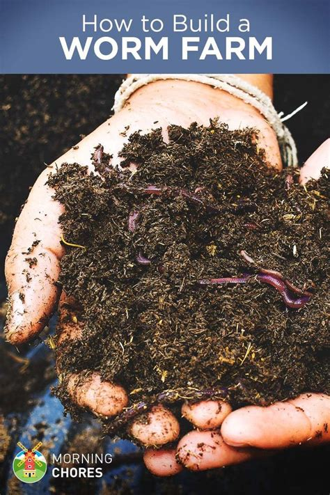 how to build a worm bed best 25 worm farm ideas on pinterest worm composting