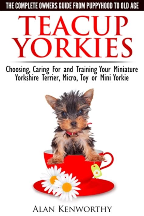how big do teacup yorkies get puppy teacup yorkies