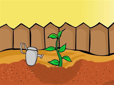 how to plant apple seeds 7 steps with pictures wikihow