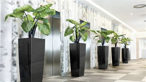 indoor plant hire office plants indoor plants