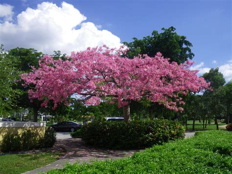 flowering shrubs south florida 187 flowering trees for south florida