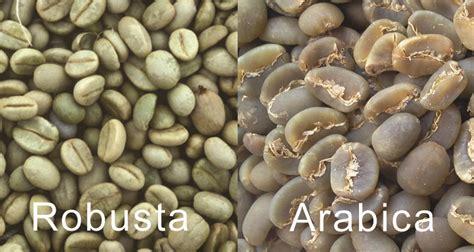 Kopi Robusta Lung 12 perbedaan kopi arabica dengan robusta majalah otten coffee