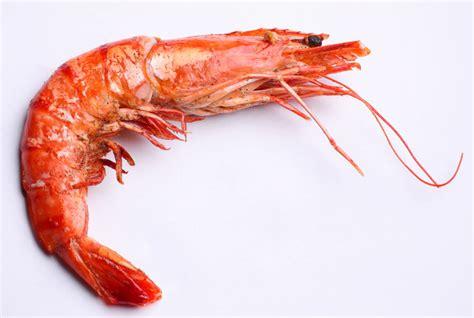 Shelf Of Shrimp by An Eat N Shrimp Stock