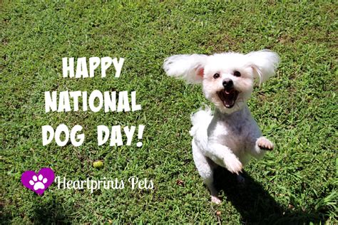 when is national puppy day happy national day heartprints pets