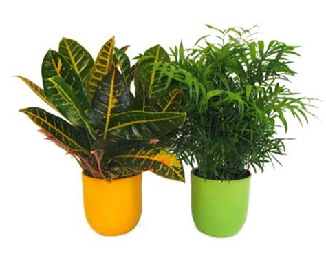 potted tropical plants potted plants avon valley floral potted plants