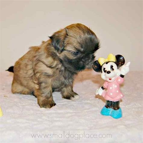 disney names for dogs disney names for