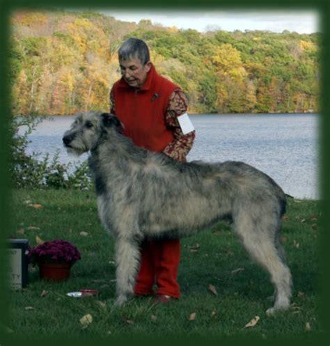 Kia Ora Stud Maltichon Breeders In East Earl Pennsylvania Breeds