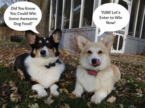 Weigh To Win Sweepstakes - achieving your pet s perfectweight consistency is key some pets