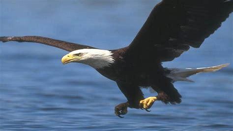 imagenes de animales vertebrados aves aves bienvenido