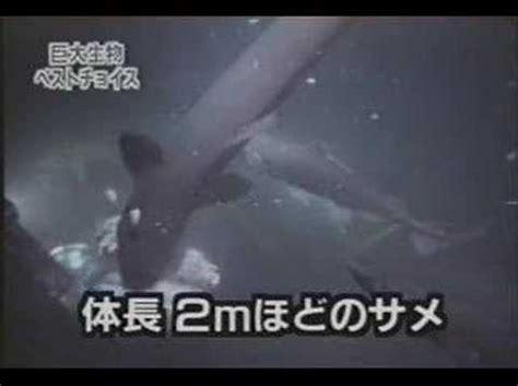 Kostum Hewan Ikan Hiu hiu megalodon masih hidup