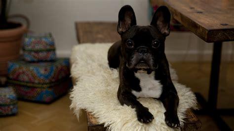 cucce da interno dalani cucce per cani da interno accessori per la casa