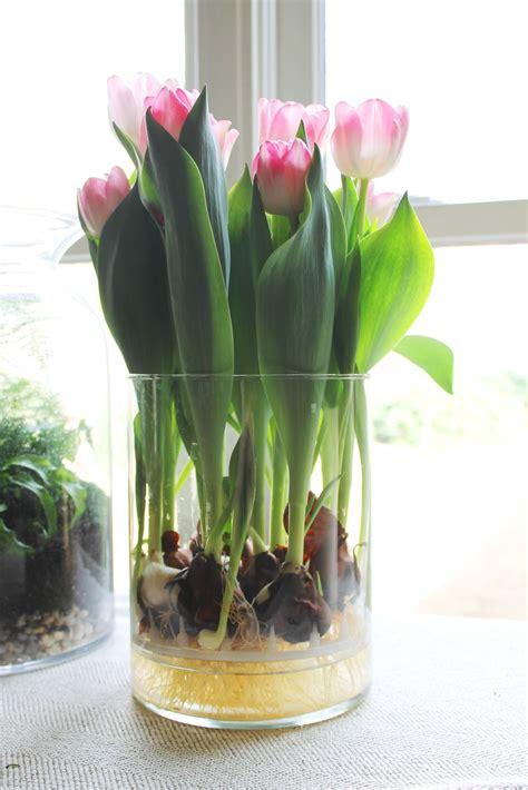 Tulip Bulbs In A Vase miss kopy exploding tulips