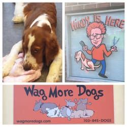 wag more dogs wag more dogs 41 photos 65 reviews pet groomers 2606 s oxford st shirlington