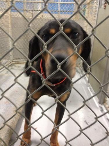 marion county pound animal shelter 1 year and shelters on