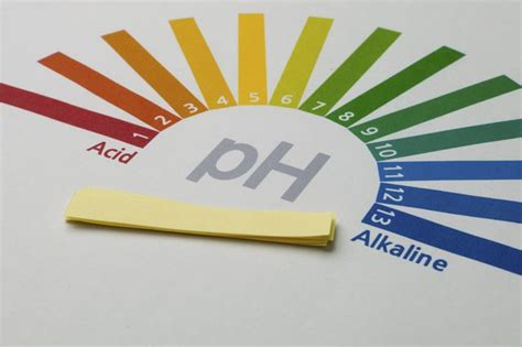 how to test soil ph with ph paper ehow