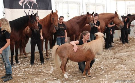 when horses are away celebs come out to play photos sowetan live cavalia where horses are the stars of the show little