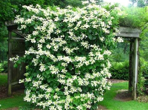 19 Best Climbing Plants For Pergolas And Trellises Best Climbing Vines For Pergolas